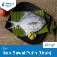 Ikan Bawal Putih Utuh