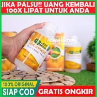 Qnc Jelly Gamat 100% Dijamin Original Bisa COD | Bukan Gold G - Luxor