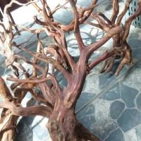 Aquascape kayu rasamala size L grade A