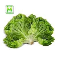selada keriting / sayuran segar - 225g