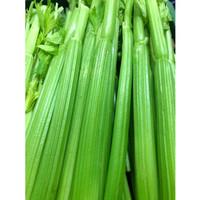 3 kg - Celery / Daun Seledri (100% Fresh)