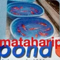 New Kolam Bak Ikan Kura Turtle Tortoise Fishpond Serbaguna Silver