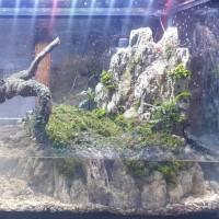 Paludarium / Aquascape Kura Kura Fullset Jadi Giantstore30