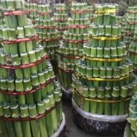 Newest Produk Tanaman Hias Air Bambu Hoki Lucky Bambk China Imlek