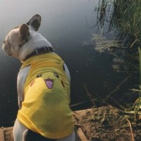 Cartoon Tee - Pet Dog Cat Clothes / Baju Kostum Anjing Kucing Hewan TJ - Pikachu, S