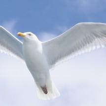 Logo Seagull89