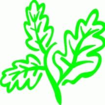 Logo Distributor Herbal