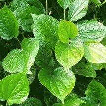 Logo Warung Herbal Tangerang