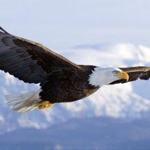 Logo Eagle15