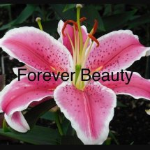 Logo Forever Beauty 99