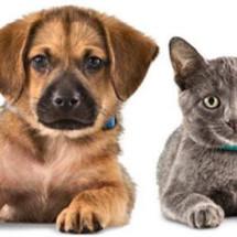 Logo Max's Pet Shop