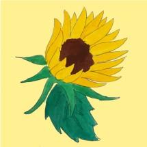 Logo daridia