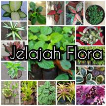 Logo Jelajah Flora