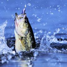 Logo hokky fishing