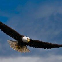 Logo Eagle High Technology