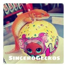 Logo SinceroGeckos