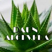 Logo Daun_aloe_vera_shop