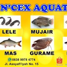 Logo N'CEX AQUATICS