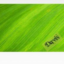 Logo davis official