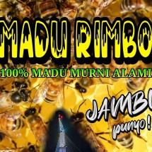 Logo Madu Rimbo Murni Jambi