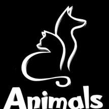 Logo PetsStation Pluit