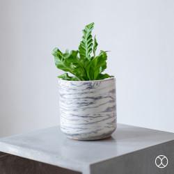 Pot Tanaman / Cassa Pot D15 (Basic) / Vas Bunga