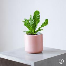 Pot Tanaman / Cassa Pot D12 (Colour) / Vas Bunga