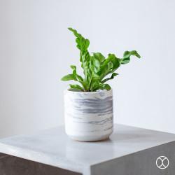 Pot Tanaman / Cassa Pot D12 (Basic) / Vas Bunga