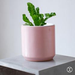 Pot Tanaman / Cassa Pot D20 (Colour) / Pot Bunga