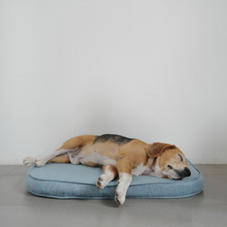 Day Dream for Pets - S (Small)