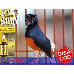 Jual Burung Cucak Ijo Di Depok Harga Terbaru 2021