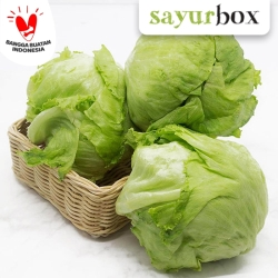 Iceberg Lettuce Value - 1pcs (Sayurbox)
