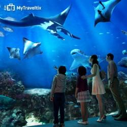 Tiket Masuk Sea Aquarium, Dewasa