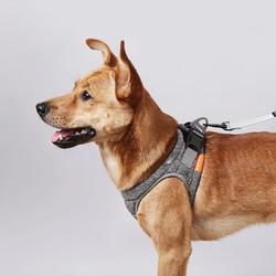 PETKIT Harness Air Pro Dog Harness