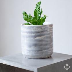 Pot Tanaman / Cassa Pot D20 (Basic) / Pot Bunga