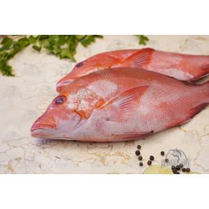 Ikan Kakap Merah | SEGAR