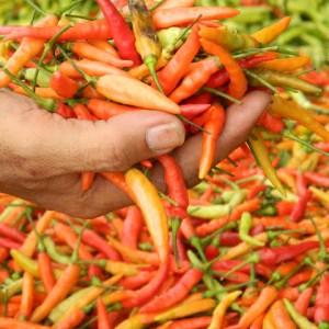 SayurHD sayur segar cabe rawit 250gr