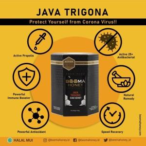 MADU TRIGONA BEEMA HONEY / madu klanceng stingless bee / madu organik