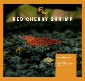 Info Hiasan Aquascape Red Cherry Shrimp Muraahh Katalog.or.id