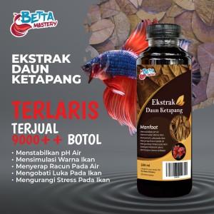Info The Real Ekstrak Ketapang Katalog.or.id