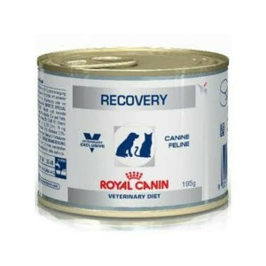 Harga Royal Canin Recovery Cats Dogs Canned Katalog.or.id