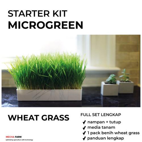 Foto Produk PAKET TANAM MICROGREEN WHEAT GRASS / RUMPUT GANDUM LENGKAP dari Mecha Farm