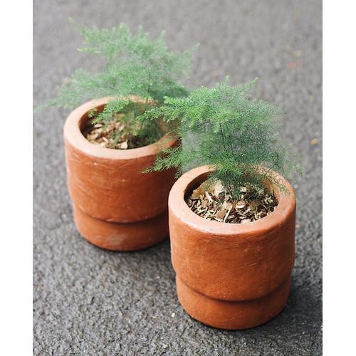 Foto Produk Asparagus Fern + Pot Terracotta (size small) dari We're close.