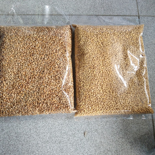 Foto Produk Catgrass Wheatgrass Benih Gandum Utuh 1 kilogram - Cokelat dari Vatonee Farm