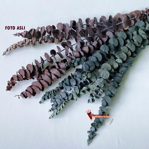 Foto Produk Preserved Daun Eukaliptus / Eukaliptus Dried Flower / Daun Kering - Maroon, 1 Pcs dari Floristsupply