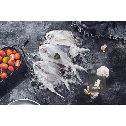 Foto Produk Ikan Bawal Putih SEGAR PREMIUM ukuran 3-4 ekor/kg dari Salmon Hu Jakarta