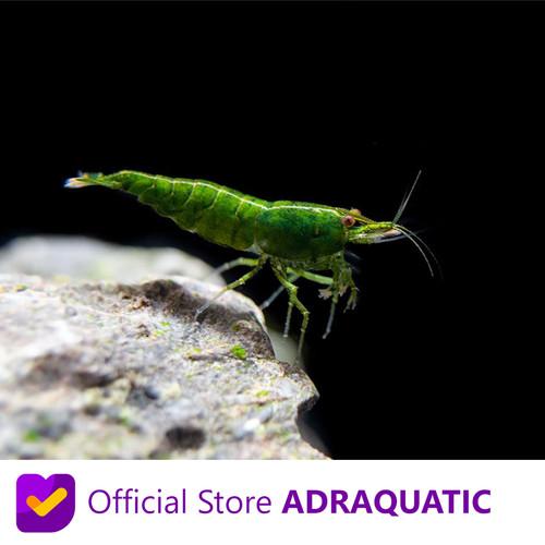 Foto Produk UDANG HIAS GREEN JADE CHERRY SHRIMP NEOCARIDINA AIR TAWAR dari ADRAQUATIC