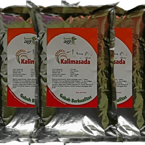 Foto Produk Padi Kalimasada Benih Padi Unggul Potensi Tinggi | Bumi Agro Nusantara dari Digital Baca