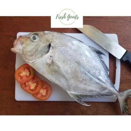 Foto Produk ikan kuwe segar - Jumbo dari Jual Hasil Laut