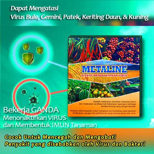 Foto Produk Obat Virus gemini Keriting Daun Kuning Pada Tanaman Cabe 100% Ampuh dari Gahendra Pupuk Organik